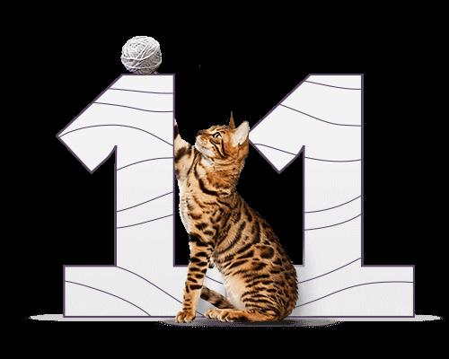 11 котов