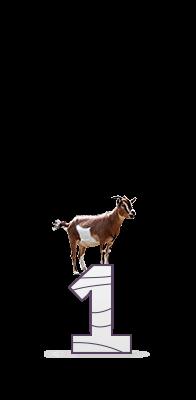 1 коза
