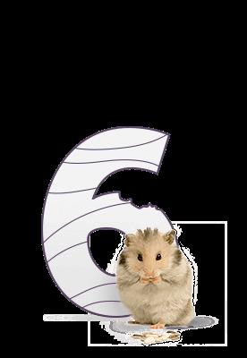6 хомяков