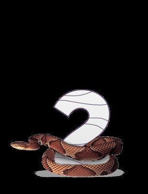 2 змеи